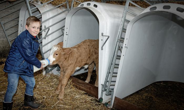 Un petit garçon donne le biberon à un veau à la ferme du Gazenas en Averon (à flavin)