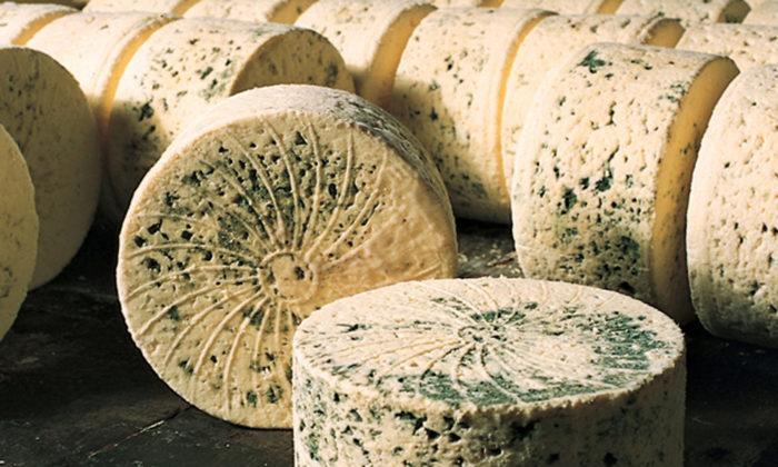 Du bleu des causses, un fromage d'Aveyron. Des fourmes sont installées sur une table