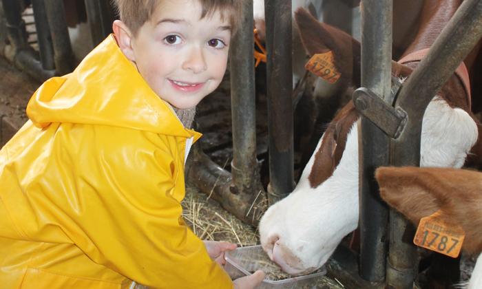 Un enfant donne à manger à une vache