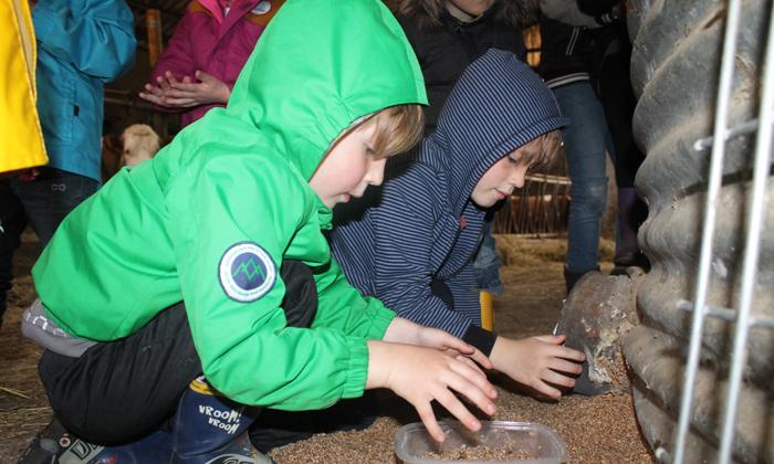 Des enfants nourissent les bêtes